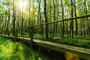 Wooden path in to the magic forest with ferns and sunlight, sunset summer evening - Stock Photo or Stock Video of rcfotostock | RC-Photo-Stock