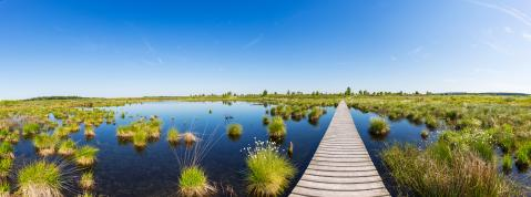 wooden trail over a bog lake at Hohes Venn panorama : Stock Photo or Stock Video Download rcfotostock photos, images and assets rcfotostock | RC-Photo-Stock.: