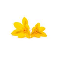 Yellow crocus flowers- Stock Photo or Stock Video of rcfotostock | RC-Photo-Stock