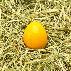 Yellow easter egg in hay from a farm- Stock Photo or Stock Video of rcfotostock | RC-Photo-Stock