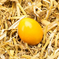 Yellow easter egg lie in straw- Stock Photo or Stock Video of rcfotostock | RC-Photo-Stock