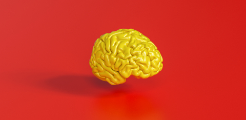 yellow human brain against red background Anatomical Model on floor- Stock Photo or Stock Video of rcfotostock | RC-Photo-Stock
