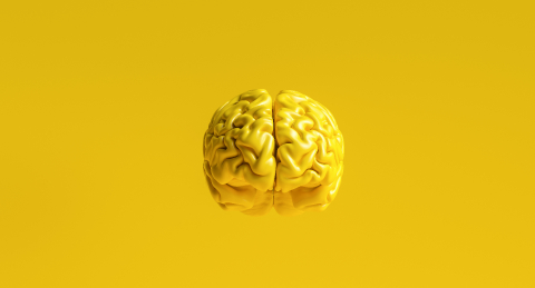 yellow human brain against yellow background Anatomical Model on floor- Stock Photo or Stock Video of rcfotostock | RC-Photo-Stock
