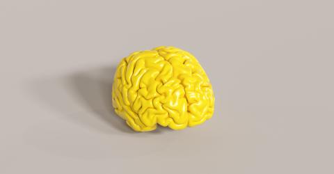 yellow human brain Anatomical Model on floor- Stock Photo or Stock Video of rcfotostock | RC-Photo-Stock