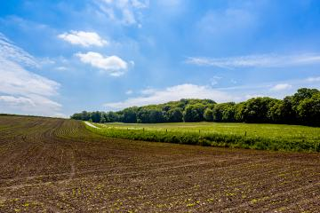 Young maize plants in the field with forest- Stock Photo or Stock Video of rcfotostock | RC-Photo-Stock