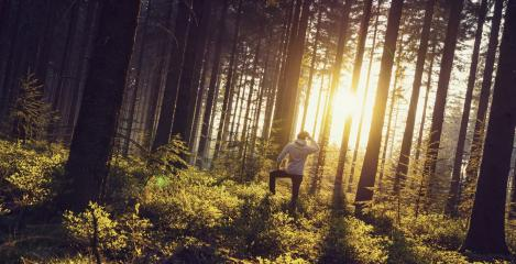 Young man looks in to the deep forrest and enjoys nature and sunset light - Travel Lifestyle emotional concept- Stock Photo or Stock Video of rcfotostock | RC-Photo-Stock