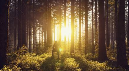 Young man looks in to the forrest and enjoys sunset light- Stock Photo or Stock Video of rcfotostock | RC-Photo-Stock