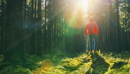 Young man stand in the green forrest with red jacket and enjoys nature and sunlight- Stock Photo or Stock Video of rcfotostock | RC-Photo-Stock