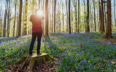 Young Man standing alone on a tree trunk at the beech forest with bluebells- Stock Photo or Stock Video of rcfotostock | RC-Photo-Stock