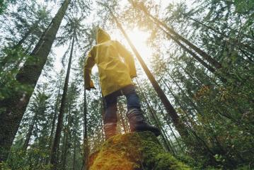 Young man standing on a tree trunk in the forest watching to the tree tops in a yellow rain coat - Stock Photo or Stock Video of rcfotostock | RC-Photo-Stock