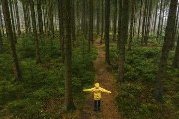 Young man standing on a tree trunk in the forest watching to the tree tops in a yellow rain coat - view from a drone- Stock Photo or Stock Video of rcfotostock | RC-Photo-Stock
