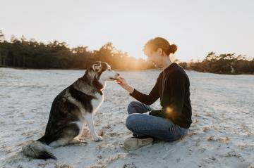 Young person feeds their dog on the beach at sunset. It's very confidential. Woman and husky are good friends have have fun at sunset. : Stock Photo or Stock Video Download rcfotostock photos, images and assets rcfotostock | RC-Photo-Stock.: