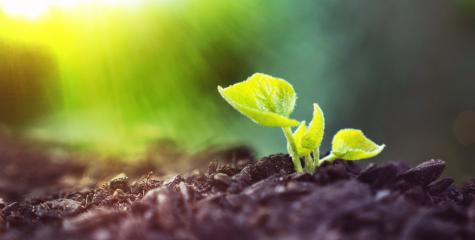 Young Plant Growing In Sunlight - Stock Photo or Stock Video of rcfotostock | RC-Photo-Stock