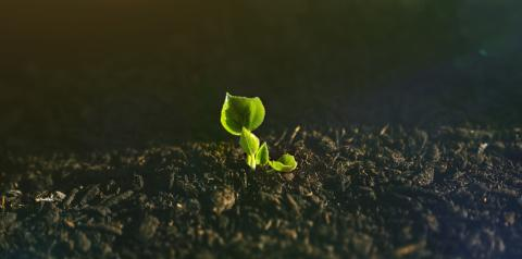 Young Plant Growing In Sunlight  : Stock Photo or Stock Video Download rcfotostock photos, images and assets rcfotostock | RC-Photo-Stock.: