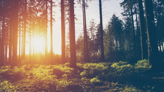 Hiker hiking in forest at sunset. hikers enjoying the awesome view at sunset in a beautiful german forest Schwarzwald landscape.- Stock Photo or Stock Video of rcfotostock | RC-Photo-Stock