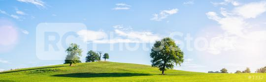 A lonely old bald tree on a fresh green meadow, a vibrant rural landscape with blue sky, panorama  : Stock Photo or Stock Video Download rcfotostock photos, images and assets rcfotostock | RC-Photo-Stock.: