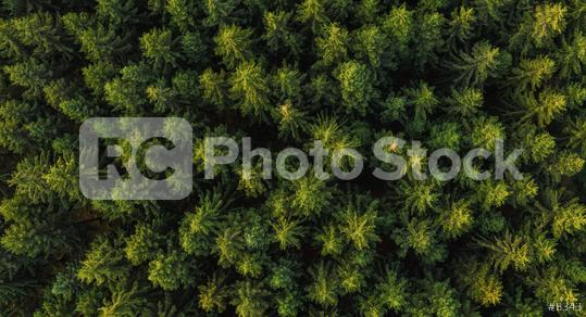 Aerial top view of green trees in forest in rural germany. Drone photography  : Stock Photo or Stock Video Download rcfotostock photos, images and assets rcfotostock   RC-Photo-Stock.: