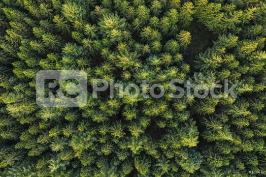 Aerial top view of pine trees in forest. Drone photography  : Stock Photo or Stock Video Download rcfotostock photos, images and assets rcfotostock | RC-Photo-Stock.: