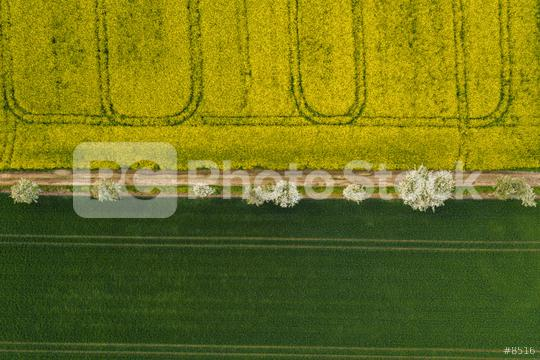 Aerial view of a rapeseed field in bloom phase and a corn field with path of tree at spring time. Ecology agriculture near farm. drone shot  : Stock Photo or Stock Video Download rcfotostock photos, images and assets rcfotostock | RC-Photo-Stock.: