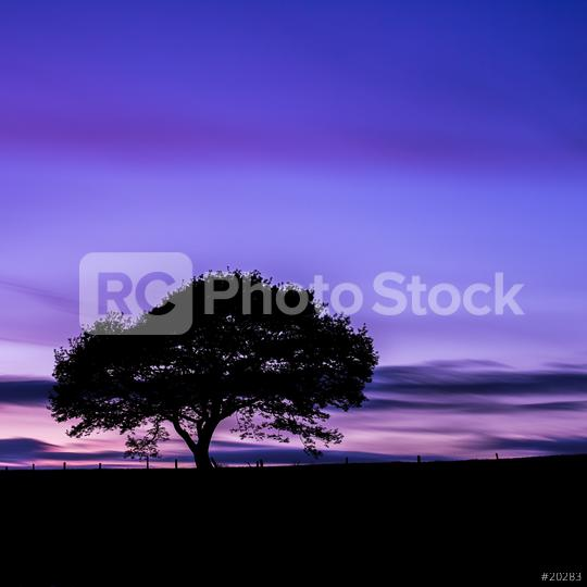Alone Old oak tree on colorful purple sunset at blue hour in summer at the Eifel national park in germany  : Stock Photo or Stock Video Download rcfotostock photos, images and assets rcfotostock | RC-Photo-Stock.: