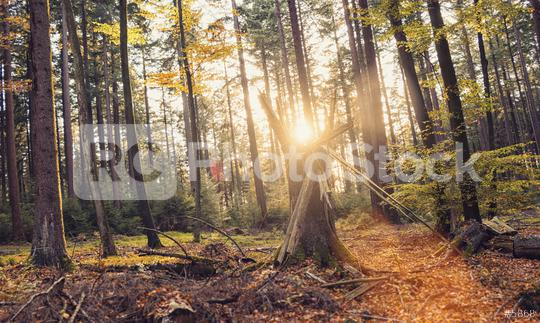 Autumn forest trees landscape with sunlight  : Stock Photo or Stock Video Download rcfotostock photos, images and assets rcfotostock   RC-Photo-Stock.: