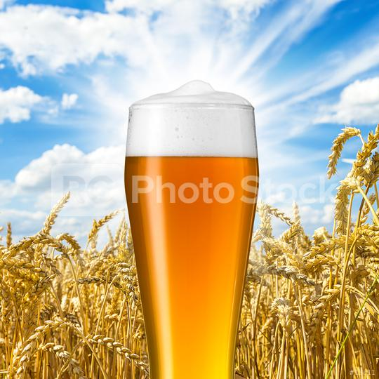 Bavarian wheat beer   : Stock Photo or Stock Video Download rcfotostock photos, images and assets rcfotostock | RC-Photo-Stock.: