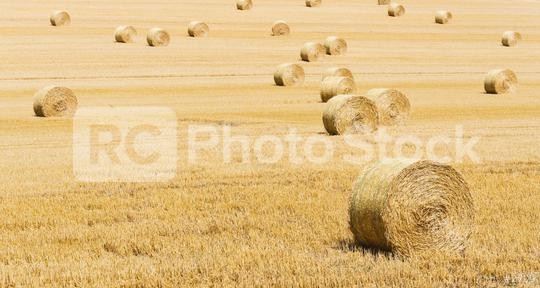 Beautiful landscape. Agricultural field. Round bundles of dry grass in the field.  : Stock Photo or Stock Video Download rcfotostock photos, images and assets rcfotostock | RC-Photo-Stock.: