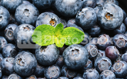 blueberries with mint leaf background or backdrop. Vegan and vegetarian concept. Macro texture of blueberry berries. Summer healthy food.   : Stock Photo or Stock Video Download rcfotostock photos, images and assets rcfotostock | RC-Photo-Stock.: