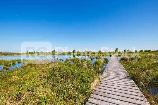 boardwalk in to a bog landscape (Hautes Fagnes) at spring  : Stock Photo or Stock Video Download rcfotostock photos, images and assets rcfotostock   RC-Photo-Stock.: