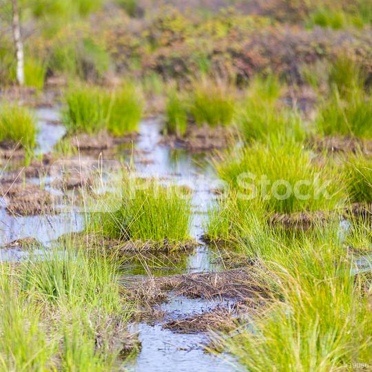 Bog lake water in Belgium Veen   : Stock Photo or Stock Video Download rcfotostock photos, images and assets rcfotostock | RC-Photo-Stock.: