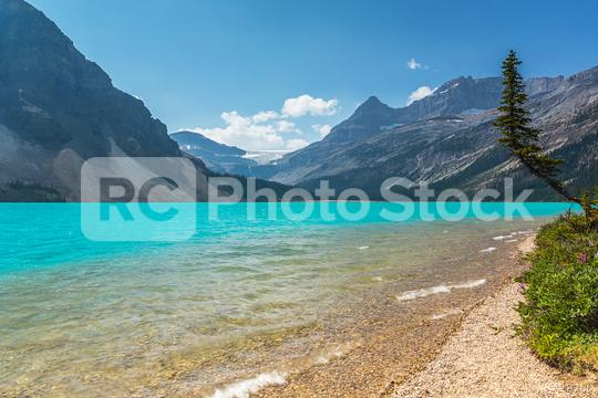 Bow Lake in british columbia banff in canada  : Stock Photo or Stock Video Download rcfotostock photos, images and assets rcfotostock   RC-Photo-Stock.: