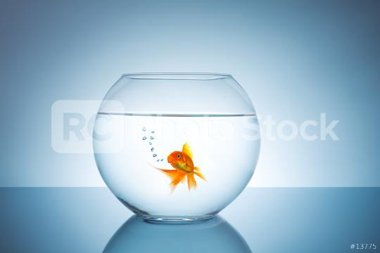 breathing goldfish in a fishbowl  : Stock Photo or Stock Video Download rcfotostock photos, images and assets rcfotostock | RC-Photo-Stock.: