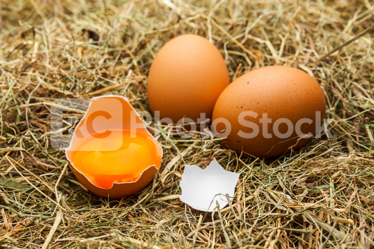Brown chicken eggs on straw  : Stock Photo or Stock Video Download rcfotostock photos, images and assets rcfotostock | RC-Photo-Stock.: