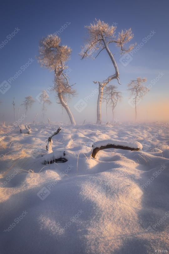 Bäume mit Eis im Schnee, Winter, Hohes Venn, Eifel, Belgien  : Stock Photo or Stock Video Download rcfotostock photos, images and assets rcfotostock | RC-Photo-Stock.: