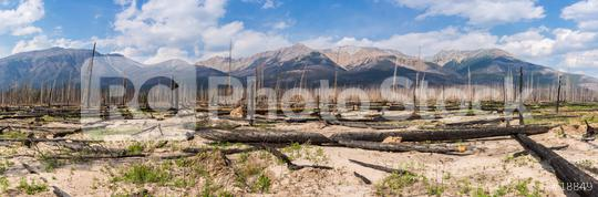 Burned forest panorama at the Jasper national park canada   : Stock Photo or Stock Video Download rcfotostock photos, images and assets rcfotostock | RC-Photo-Stock.: