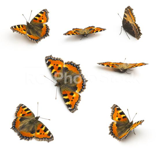 Butterflies orange Majesticsensor set collection on white background  : Stock Photo or Stock Video Download rcfotostock photos, images and assets rcfotostock | RC-Photo-Stock.: