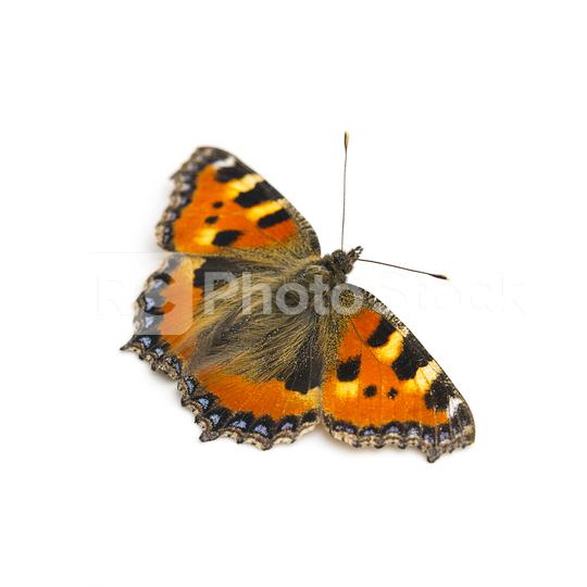 butterfly orange black spots Majesticsensor on white background  : Stock Photo or Stock Video Download rcfotostock photos, images and assets rcfotostock   RC-Photo-Stock.: