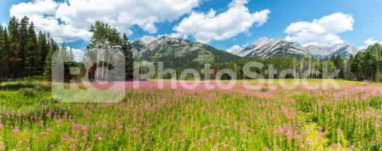 Canadian Rockies panorama in summer at th banff national park  : Stock Photo or Stock Video Download rcfotostock photos, images and assets rcfotostock   RC-Photo-Stock.: