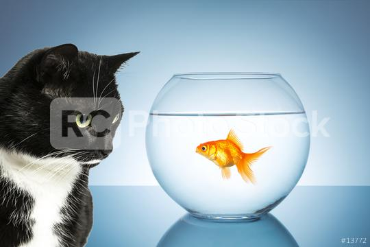 cat and goldfish  : Stock Photo or Stock Video Download rcfotostock photos, images and assets rcfotostock | RC-Photo-Stock.: