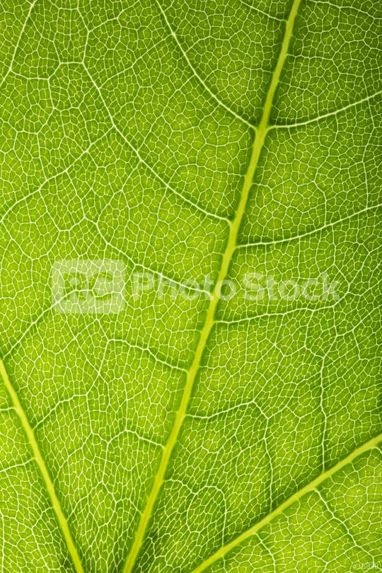 Close up on green leaf texture  : Stock Photo or Stock Video Download rcfotostock photos, images and assets rcfotostock   RC-Photo-Stock.: