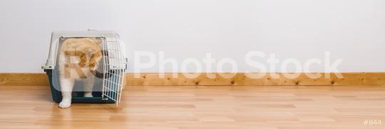 Cute tabby cat sitting in a travel crate or pet carrier and look sideways, banner size, copyspace for your individual text.  : Stock Photo or Stock Video Download rcfotostock photos, images and assets rcfotostock   RC-Photo-Stock.: