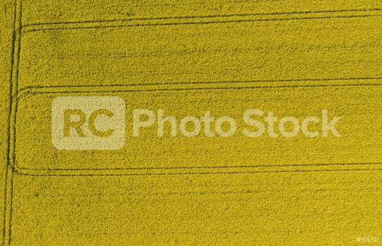field of rapeseed from above. drone shot  : Stock Photo or Stock Video Download rcfotostock photos, images and assets rcfotostock | RC-Photo-Stock.: