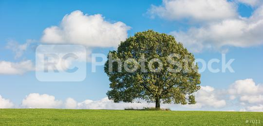 Field with tree and cloudy sky  : Stock Photo or Stock Video Download rcfotostock photos, images and assets rcfotostock | RC-Photo-Stock.: