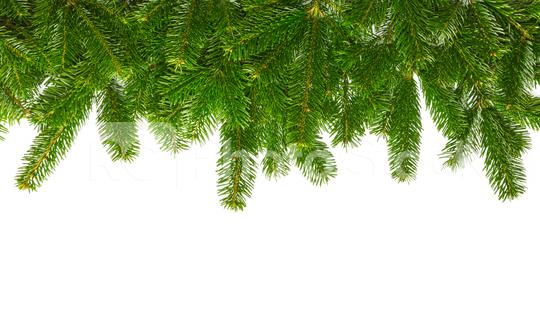 fir branches background  : Stock Photo or Stock Video Download rcfotostock photos, images and assets rcfotostock | RC-Photo-Stock.: