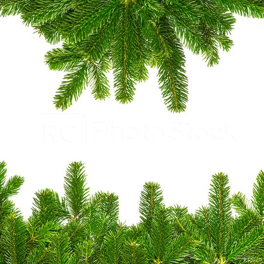 fir branches for christmas background  : Stock Photo or Stock Video Download rcfotostock photos, images and assets rcfotostock | RC-Photo-Stock.: