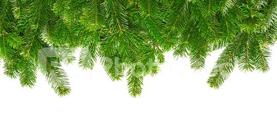fir branches isolated on white  : Stock Photo or Stock Video Download rcfotostock photos, images and assets rcfotostock | RC-Photo-Stock.: