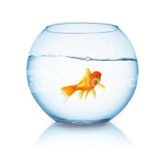 fishbowl with a goldfish  : Stock Photo or Stock Video Download rcfotostock photos, images and assets rcfotostock | RC-Photo-Stock.: