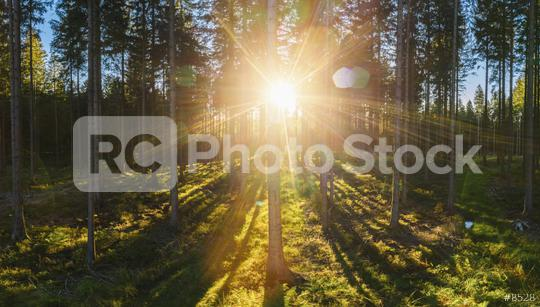 forest backlighted by golden sunlight before sunset panorama - aerial drone shot  : Stock Photo or Stock Video Download rcfotostock photos, images and assets rcfotostock   RC-Photo-Stock.: