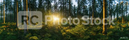 Forest panorama with sunsetlight  : Stock Photo or Stock Video Download rcfotostock photos, images and assets rcfotostock | RC-Photo-Stock.: