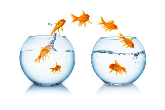 goldfish change  : Stock Photo or Stock Video Download rcfotostock photos, images and assets rcfotostock | RC-Photo-Stock.: